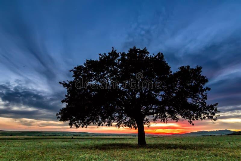 Schöne Landschaft mit einer einsamen Eiche auf einem Gebiet, die untergehende Sonne, die durch Niederlassungen scheinen und Sturm stockfotografie