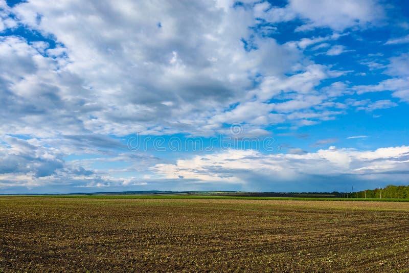 Schöne Landschaft mit grünem Feld und großen weißen Wolken stockfoto