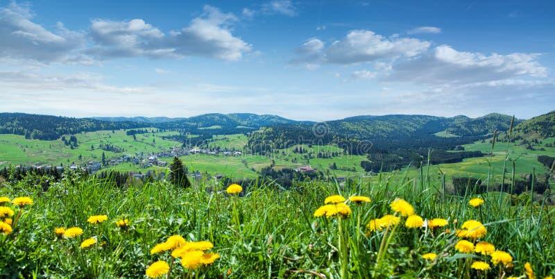 Schöne Landschaft mit grünem Gras und gelben Blumen lizenzfreies stockbild