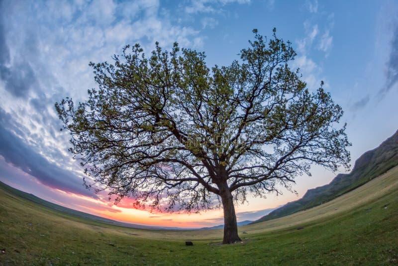 Schöne Landschaft mit grüner Vegetation, einem einsamen großen Baum und einem blauen Sonnenunterganghimmel mit Wolken stockbild