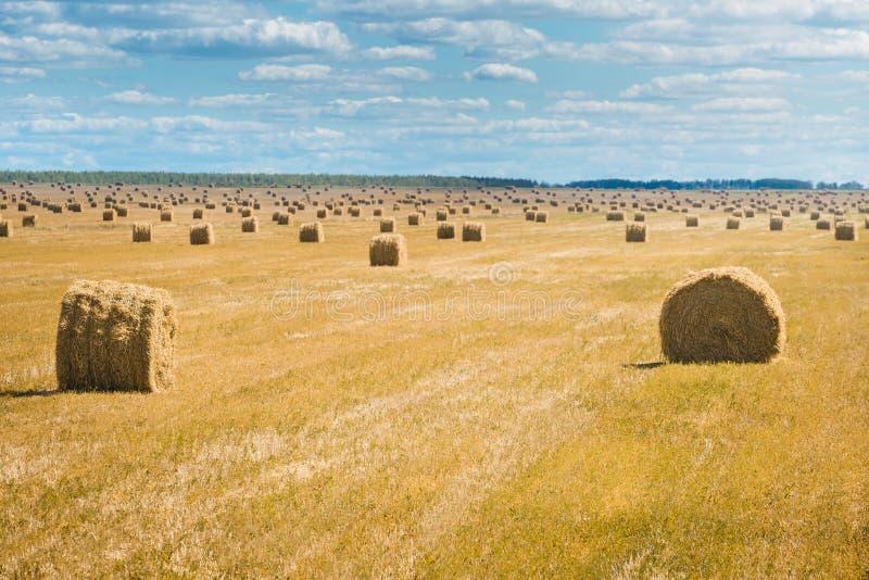 Schöne Landschaft mit Strohballen im Ende des Sommers Feld mit vielen Heuballen stockbild