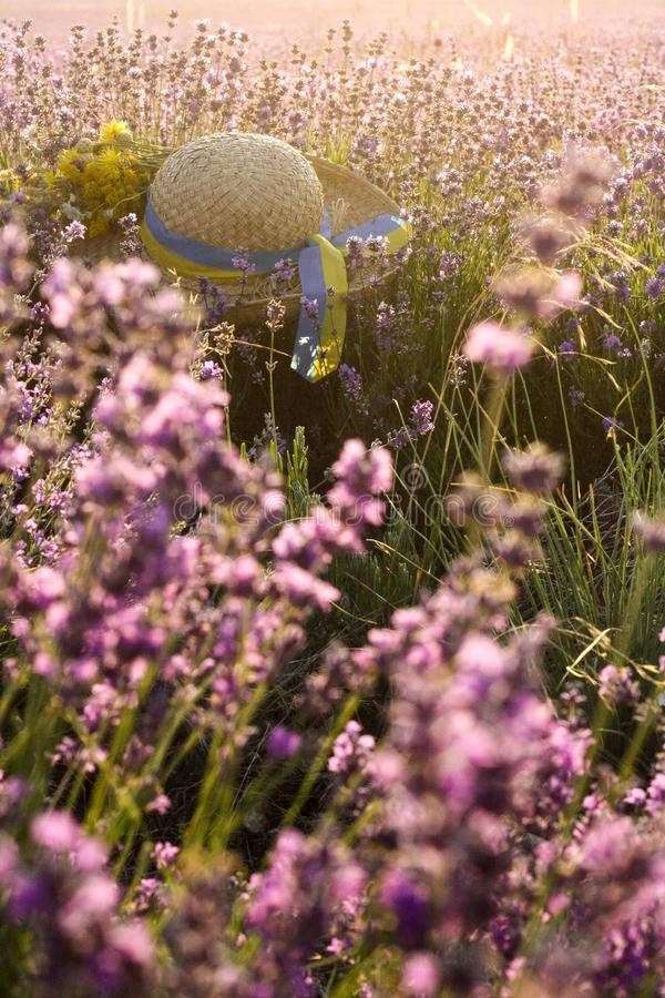 Schöne Landschaft mit violettem Lavendelfeld und -strohhut lizenzfreies stockbild