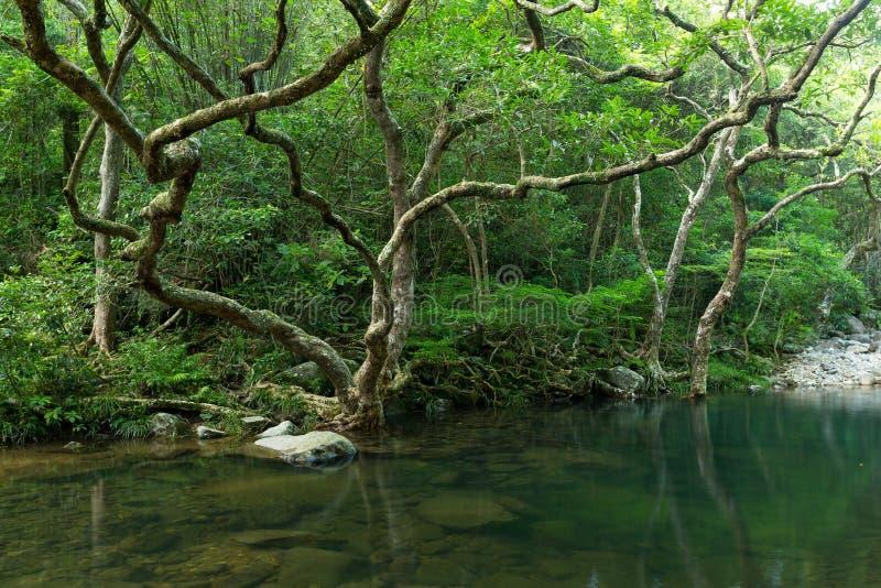 Schöne Landschaft mit Waldsee lizenzfreies stockbild