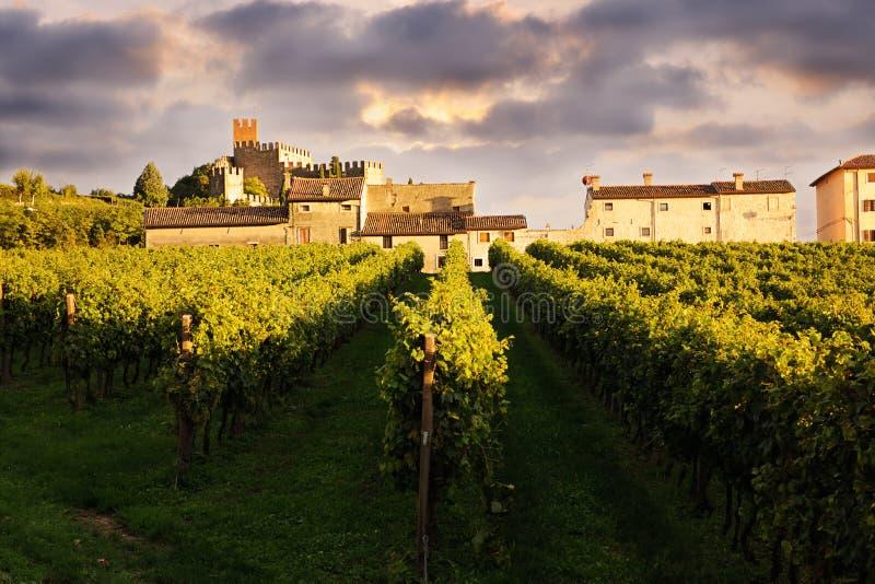 Schöne Landschaft mit Weinbergen stockbilder