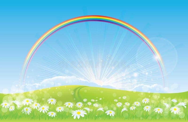Schöne Landschaft - Regenbogen - Gänseblümchen vektor abbildung