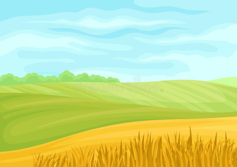 Schöne Landschaft von grünen und gelben Feldern Vektorabbildung auf wei?em Hintergrund lizenzfreie abbildung