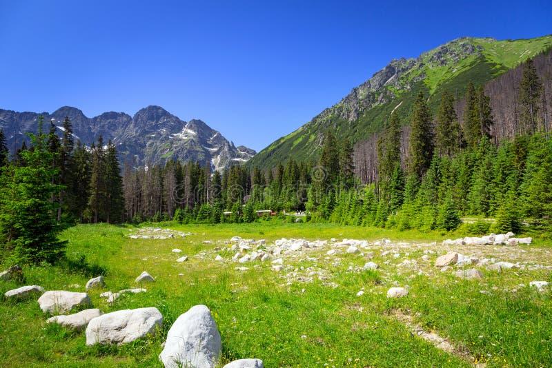 Schöne Landschaft von Wlosienica-Wiese in Tatra-Berg lizenzfreie stockfotos