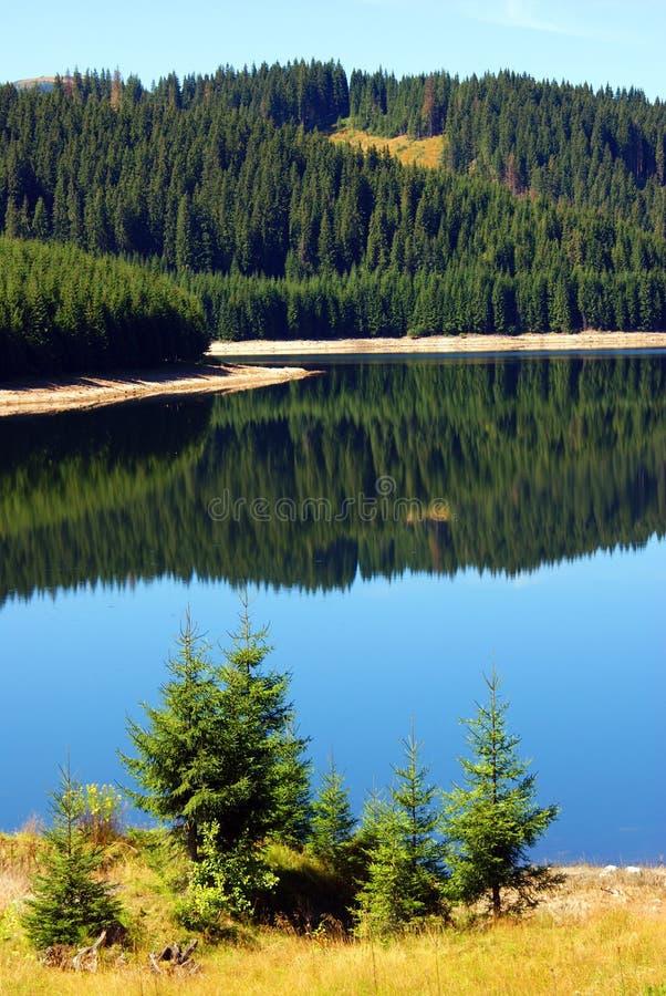 Schöne Landschaft: Wald reflektierte sich im See stockfotos