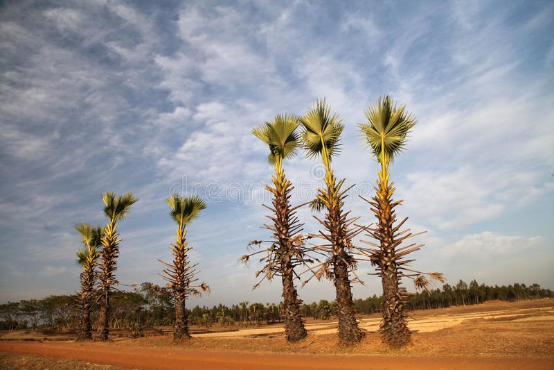 Schöne Landschaft WestBengal-Indien lizenzfreie stockfotografie