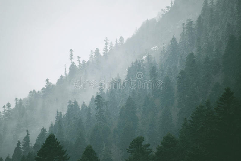 Schöne Landschaften des Winterwaldes stockfotografie