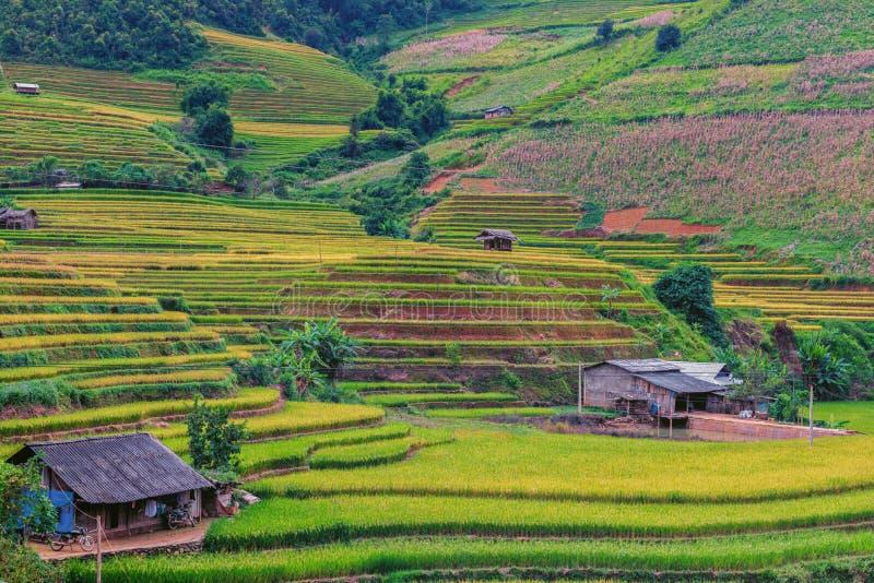 Schöne Landschaftsansicht der Reisterrasse und des kleinen Hauses lizenzfreies stockfoto