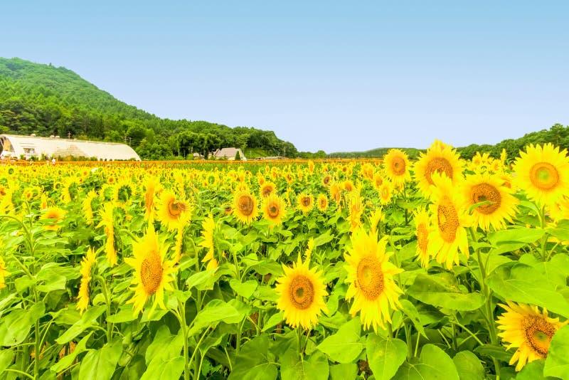 Schöne Landschaftsansicht von Utsukushigahara-Park und von Radio towe lizenzfreies stockbild