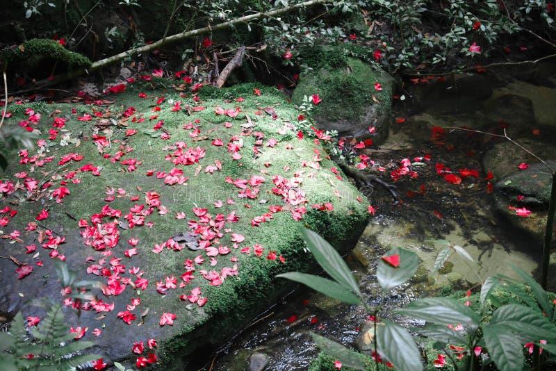 Schöne Landschaftswasserfallgrünwald- und -blütenahornbäume an Nationalpark Phu Kra Dueng, Loei Thailand lizenzfreie stockfotos