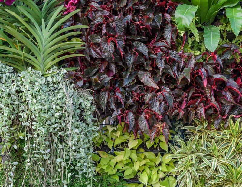 Schöne Laubgartenwand lizenzfreies stockbild