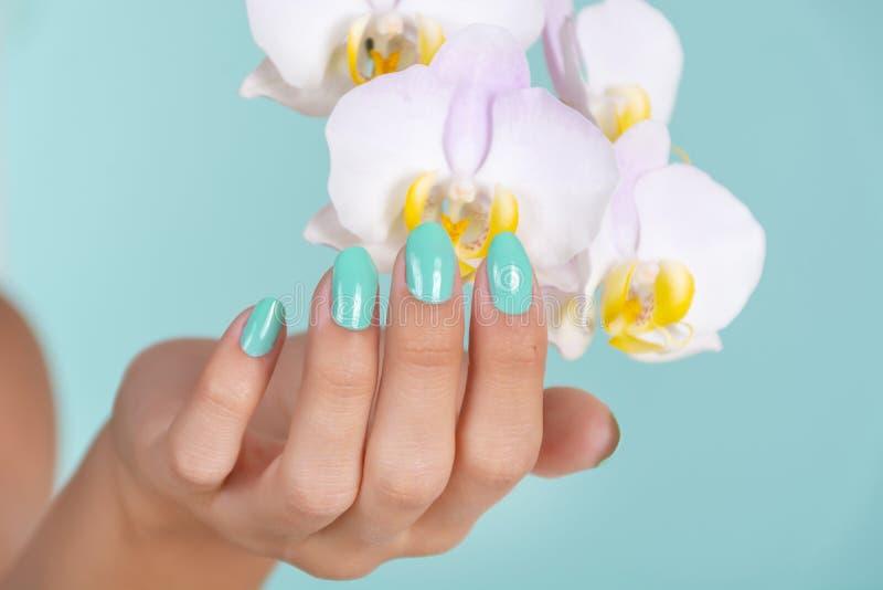 Schöne Mädchenhand mit einer Türkisfarbmaniküre auf den Nägeln und heller lila Orchideenblume lokalisiert auf weichem blauem Hint lizenzfreies stockbild