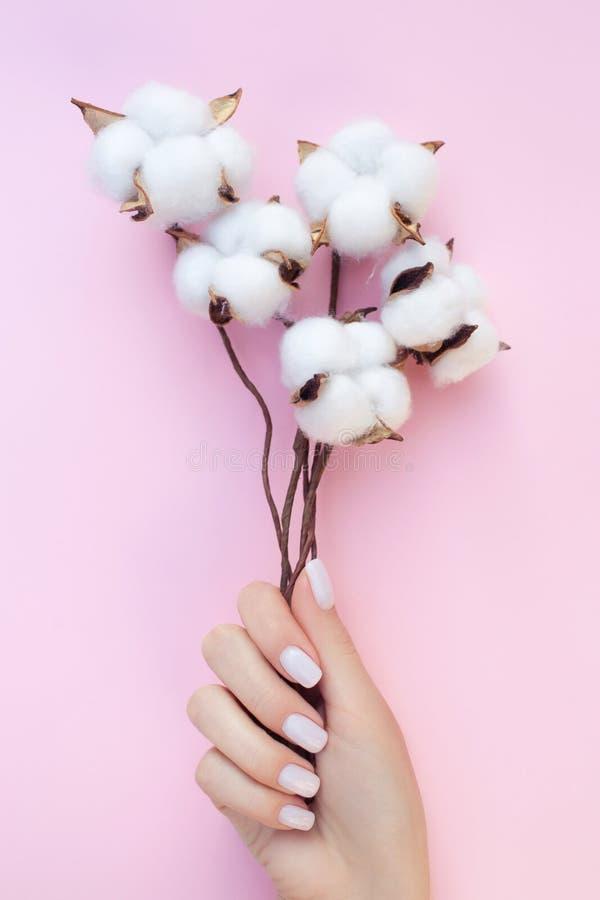 Schöne Maniküre mit Baumwollblumen auf dem rosa Hintergrund stockfotos