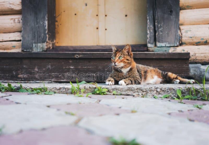 Schöne mehrfarbige Katze mit den grünen Augen, die an der Schwelle zu einem Landhaus stillstehen stockbild