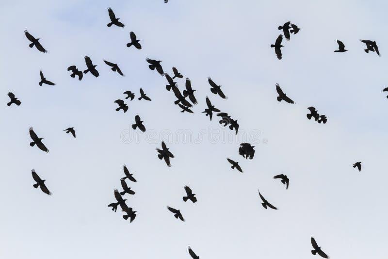 Schöne Mengentürme, die durch den Himmel fliegen lizenzfreie stockfotografie