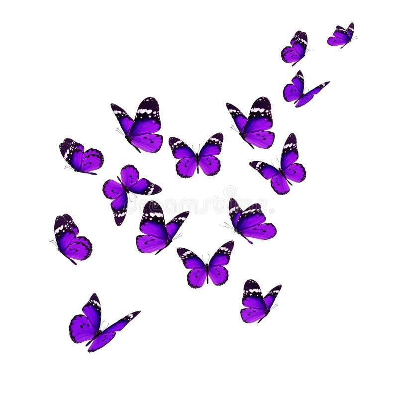 Schöne Monarch-Basisrecheneinheit lizenzfreie abbildung