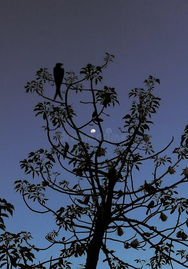A schöne Mondansicht durch Baumaste vektor abbildung