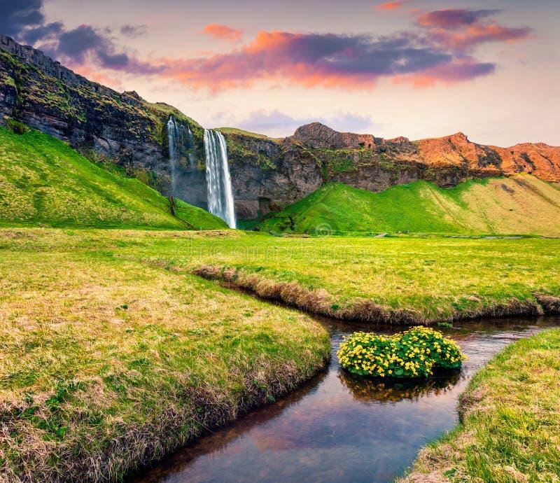 Schöne Morgenansicht von Seljalandfoss-Wasserfall auf Seljalandsa stockfotografie