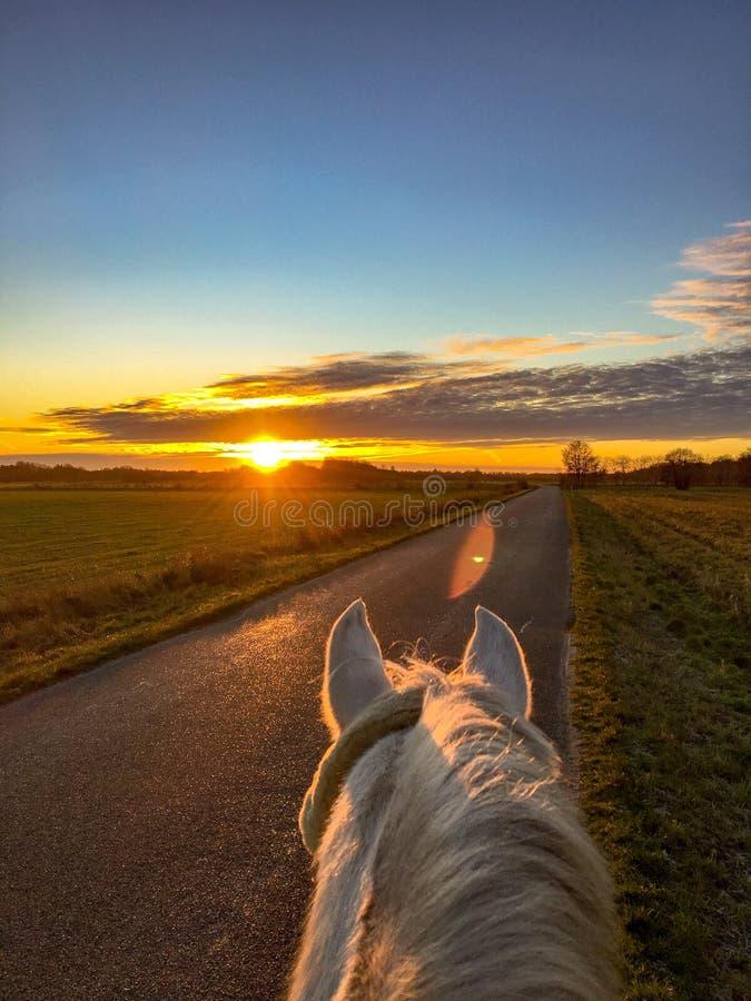 Schöne Morgenfahrt auf mein Pferd lizenzfreies stockbild