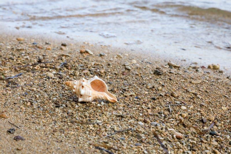 Schöne Muschel der MorgenSommerzeit auf dem Strand lizenzfreies stockbild