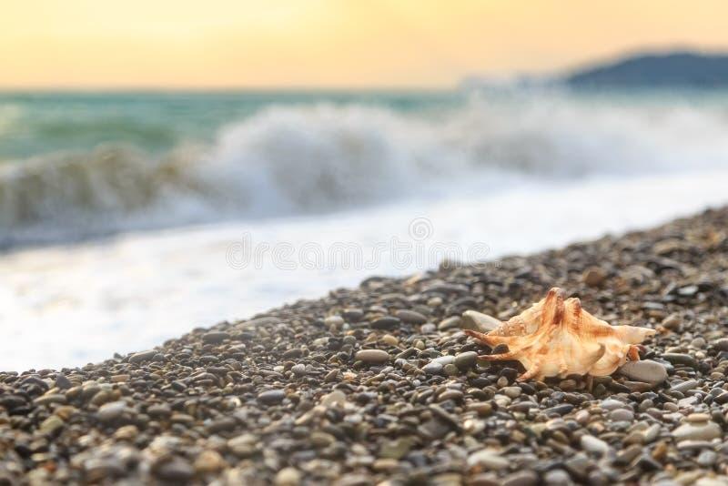 Schöne Muschellügen auf einem Pebble Beach gegen einen Hintergrund des Meeres bewegen wellenartig lizenzfreie stockfotografie
