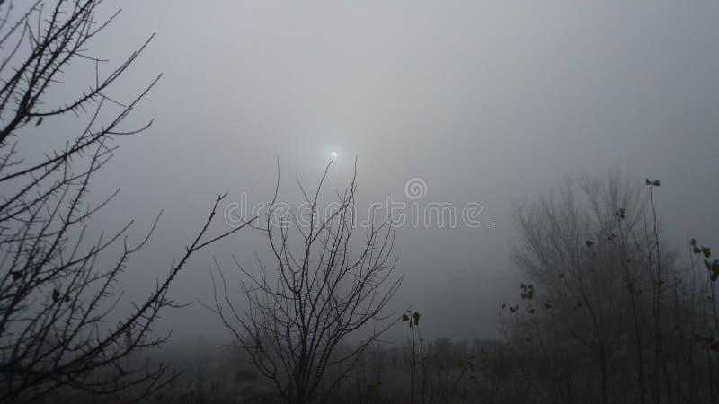 Schöne mystische surrealistische Morgenlandschaft im nebeligen Wetter mit weniger schwacher Sonne auf Baumast lizenzfreie stockfotos