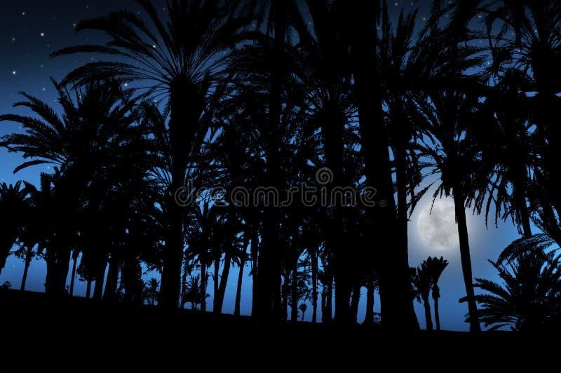 Schöne Nachtlandschaft mit Palmen und dem Mond stockfotografie