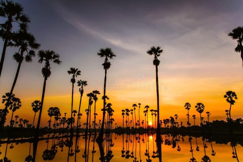 Schöne Natur des Sonnenuntergangs mit Palme lizenzfreies stockfoto