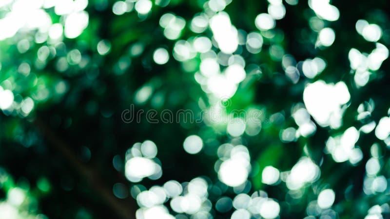 Schöne Natur, dunkelgrüner Hintergrund, rundes bokeh stockfoto