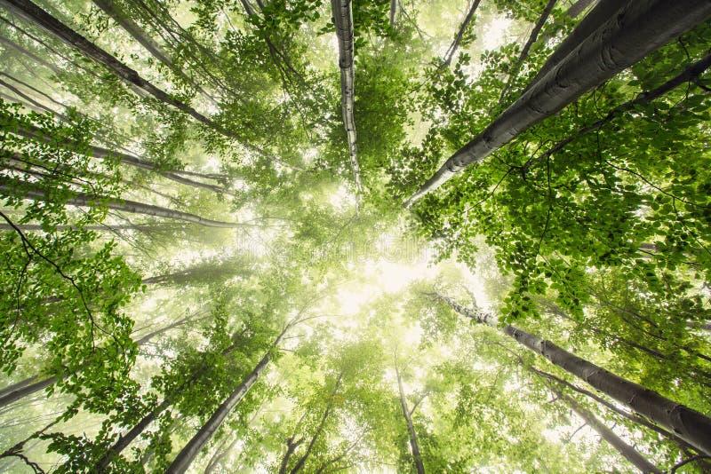 Schöne Natur am Morgen im nebelhaften Frühlingswald mit Sonne stockfoto