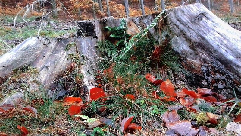 Schöne Natur Reise durch den Waldwaldweg Herbst ist gekommen stockfoto