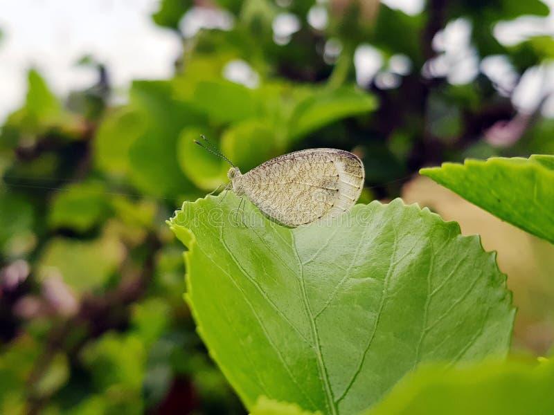 Schöne Naturszene mit Schmetterling, lizenzfreies stockfoto