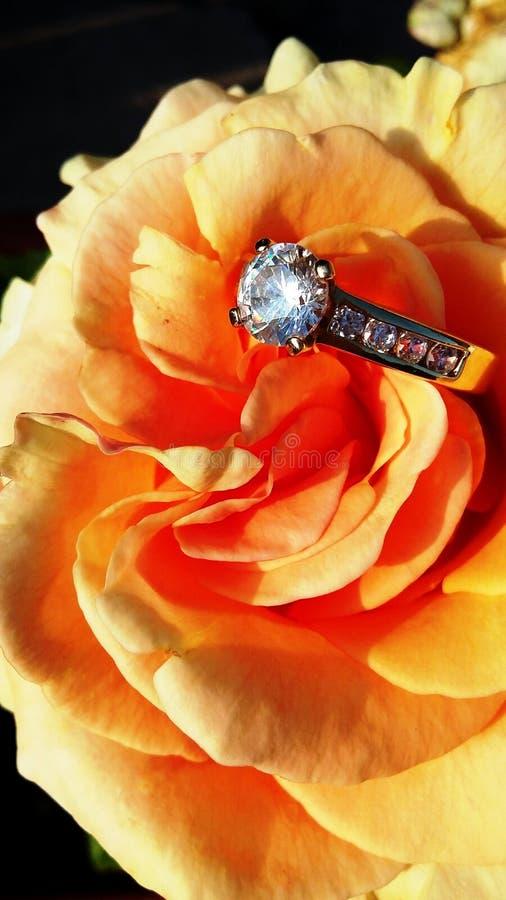 Schöne Orange - Aprikose stieg mit einem Ring lizenzfreies stockfoto