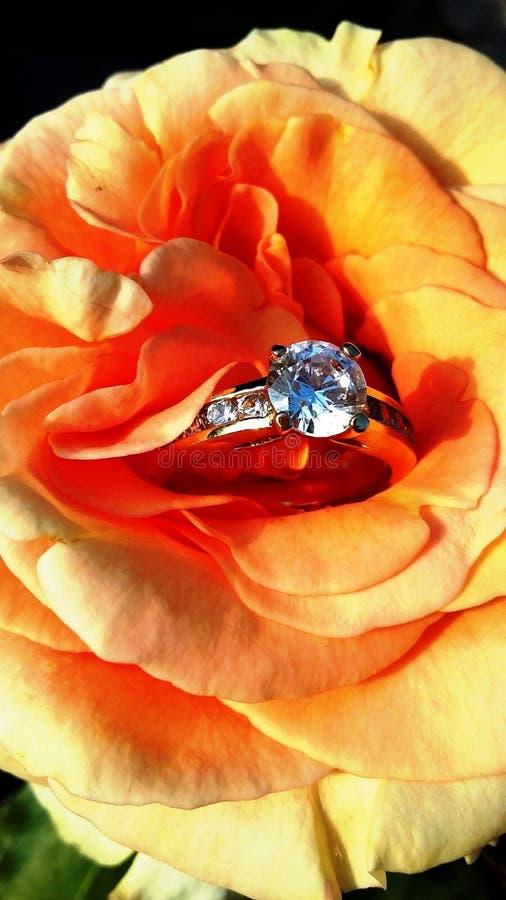 Schöne Orange - Aprikose stieg mit einem Ring lizenzfreie stockbilder