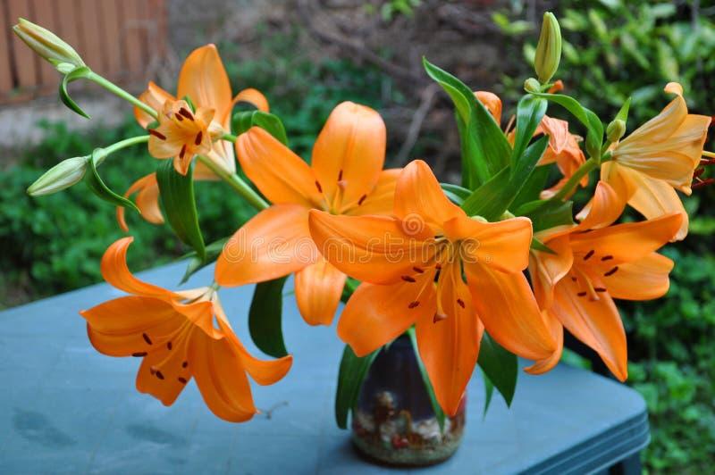 Orange Frühlingslilien tigerlily stockbilder