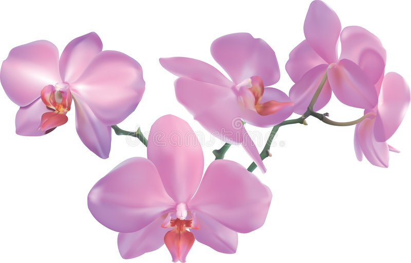 Schöne Orchidee stock abbildung