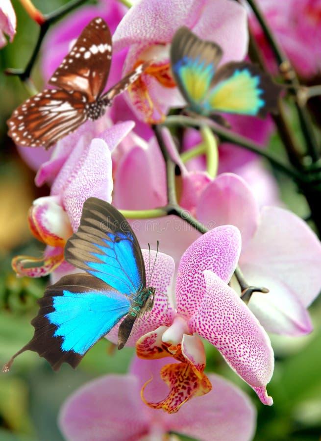 Schöne Orchideeblumen stockfoto