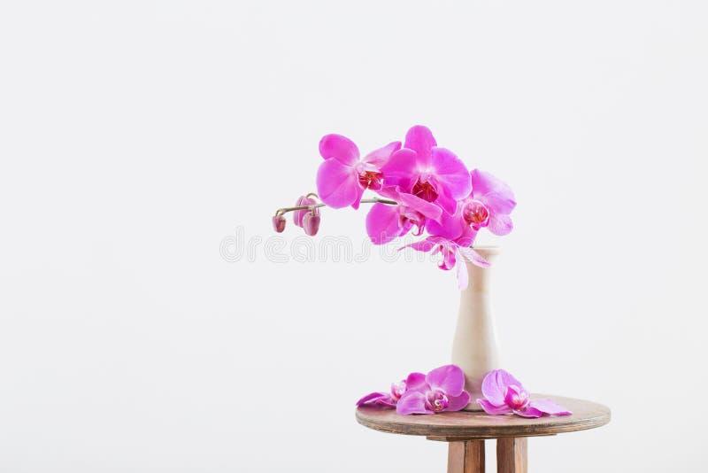 Schöne Orchideen im Vase auf altem Vase stockfoto