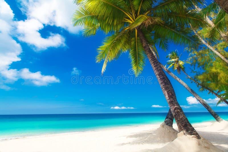 Schöne Palme über weißem Sandstrand Schöne Palme über weißem Sandstrand Sommer n stockbild