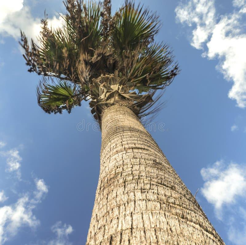 Schöne Palme auf dem Hintergrund eines schönen blauen Himmels in Paphos, Zypern lizenzfreie stockfotos