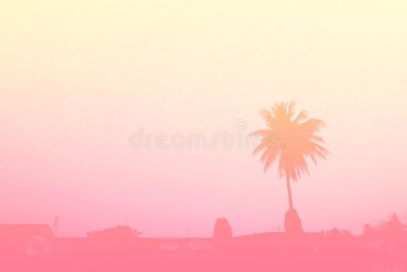 Schöne Palme Pastell-Tone Nature, kopieren Abstand des Sommers Minimales Konzept Sommer auf dem Strand mit Palme im rosa Himmel stockfotografie