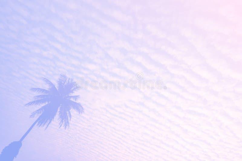 Schöne Palme Pastell-Tone Nature, kopieren Abstand des Sommers Minimales Konzept Sommer auf dem Strand mit Palme im rosa Himmel lizenzfreie stockfotografie
