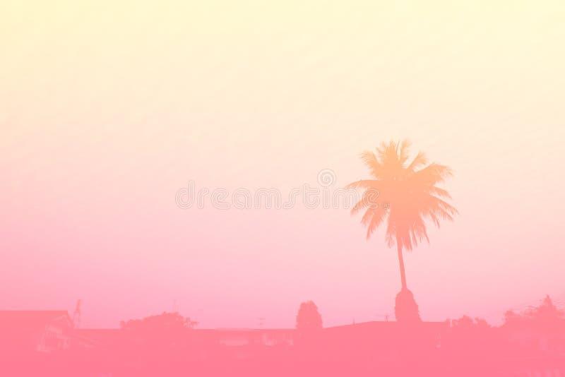 Schöne Palme Pastell-Tone Nature, kopieren Abstand des Sommers Minimales Konzept Sommer auf dem Strand mit Palme im rosa Himmel lizenzfreies stockbild