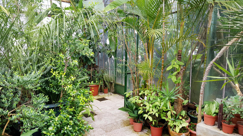 Schöne Palmen in Sofia Botanical Garden stockfoto
