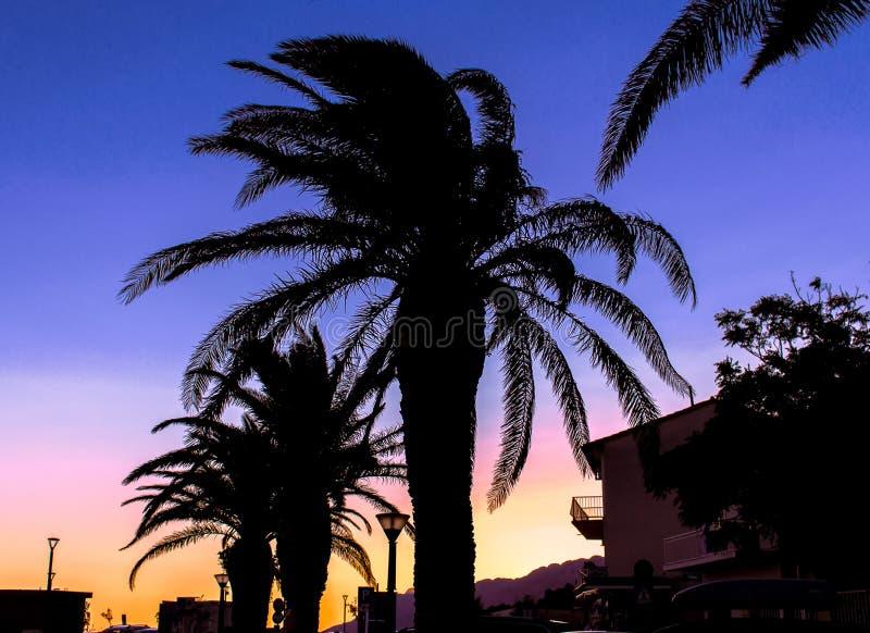Schöne Palmen während des Abend wuth schönen Sonnenuntergangs lizenzfreie stockfotografie