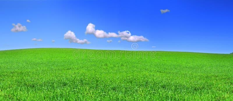 Schöne panoramische Ansicht der ruhigen Wiese stockfotografie
