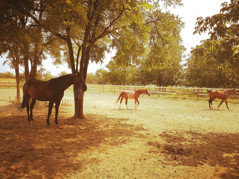 Schöne Pferde lizenzfreies stockfoto
